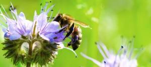 ape sfondo verde
