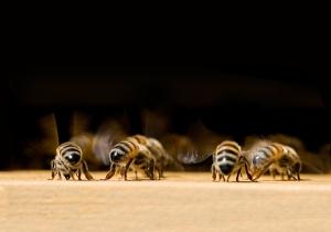 battito ali api