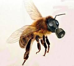 ape-maschera-gas