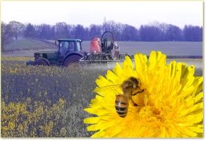 ape-pesticidi