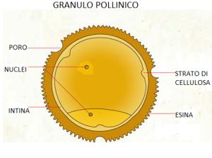 esina-polline