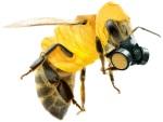 ape maschera
