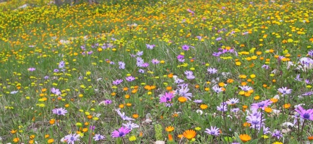 fioritura spontanea
