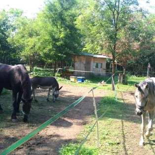 cavalli in apiario integrato
