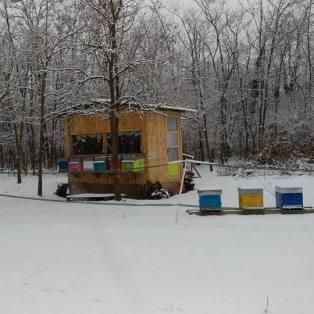 inverno apiario integrato