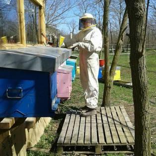 lavori nell'apiario integrato